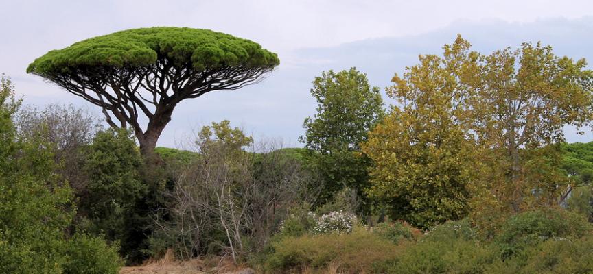 alberi di PESCARA